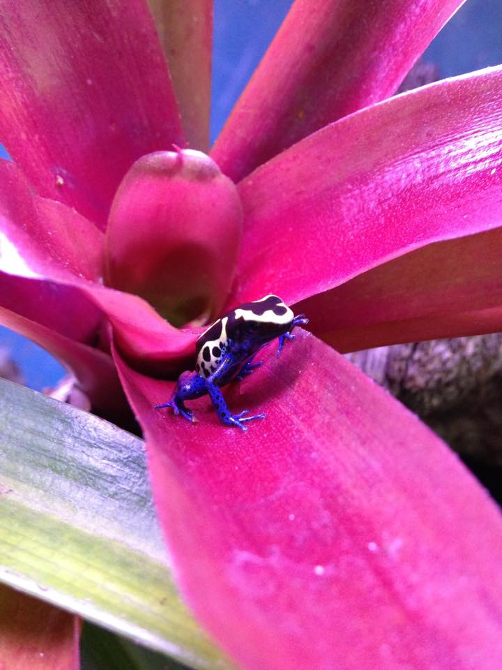 Blue baby on a pink plant...LOVELY!