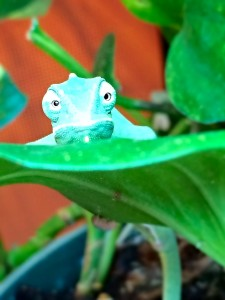We breed many of our chameleons, and are happy to say we know the history of our critters.